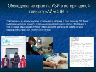 Обследование крыс на УЗИ в ветеринарной клинике «АЙБОЛИТ» УЗИ показало, что к