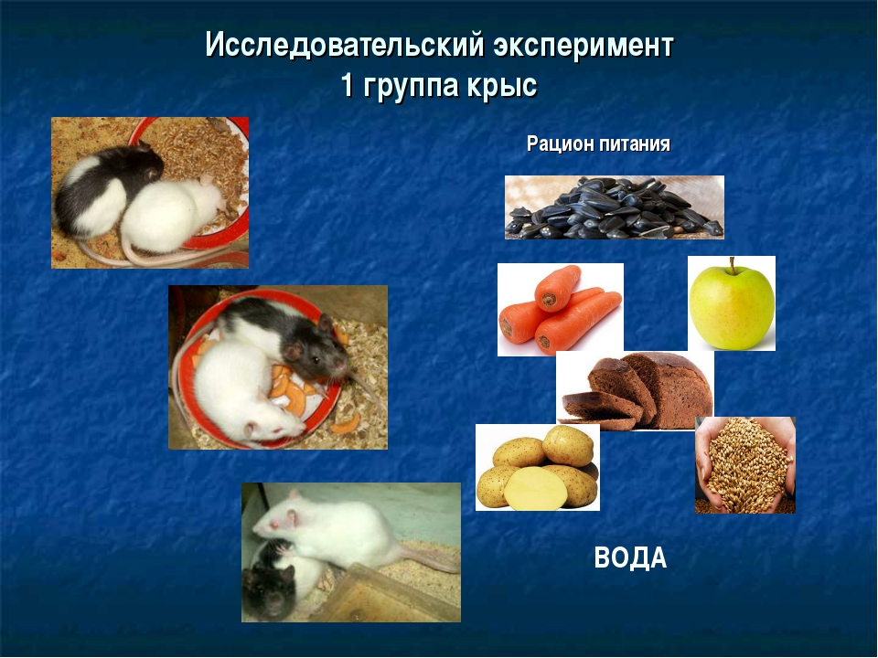 Исследовательский эксперимент 1 группа крыс ВОДА Рацион питания