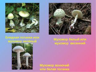 Желчный гриб Сатанинский гриб