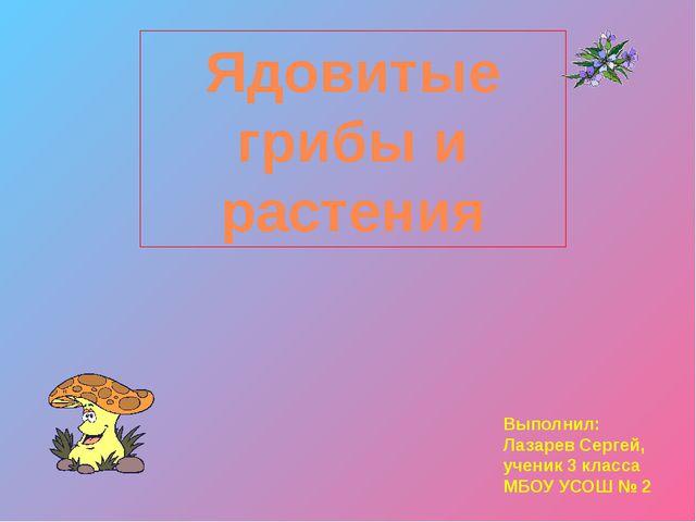 Мухомор красный Мухомор пантерный Мухомор шафранный Цезарский гриб