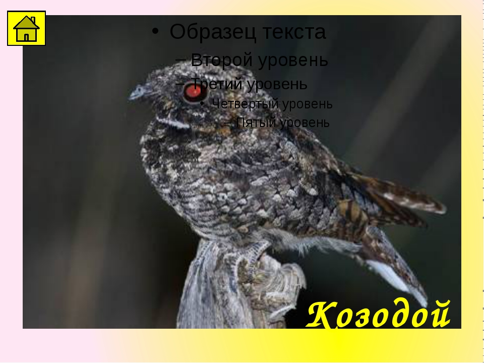 Отгадайте птицу – певца. Музыка Дрозд