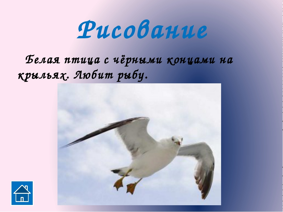 Птица, не имеющая голоса. Рисование