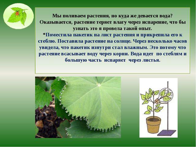 Мы поливаем растения, но куда же девается вода? Оказывается, растение теряет...