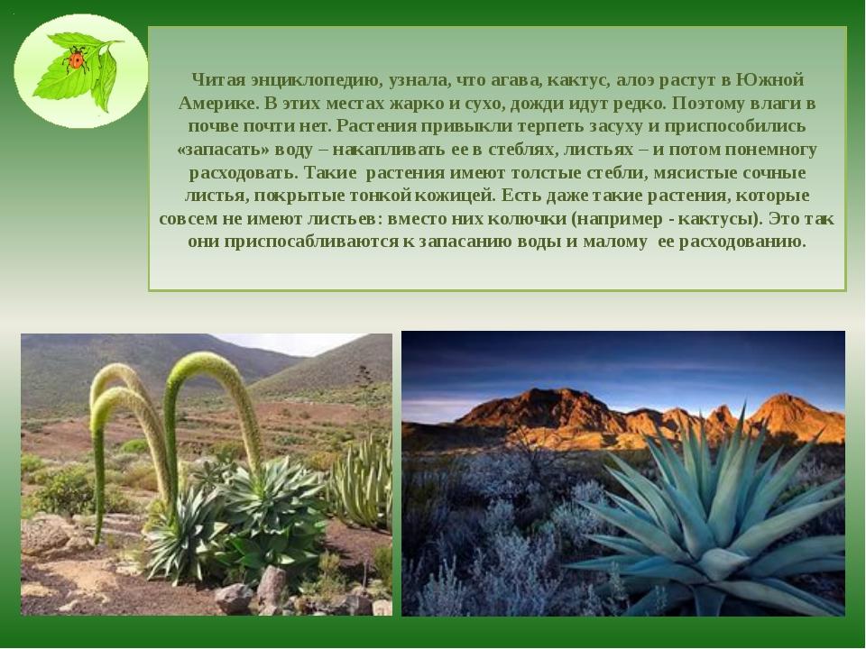 Читая энциклопедию, узнала, что агава, кактус, алоэ растут в Южной Америке. В...