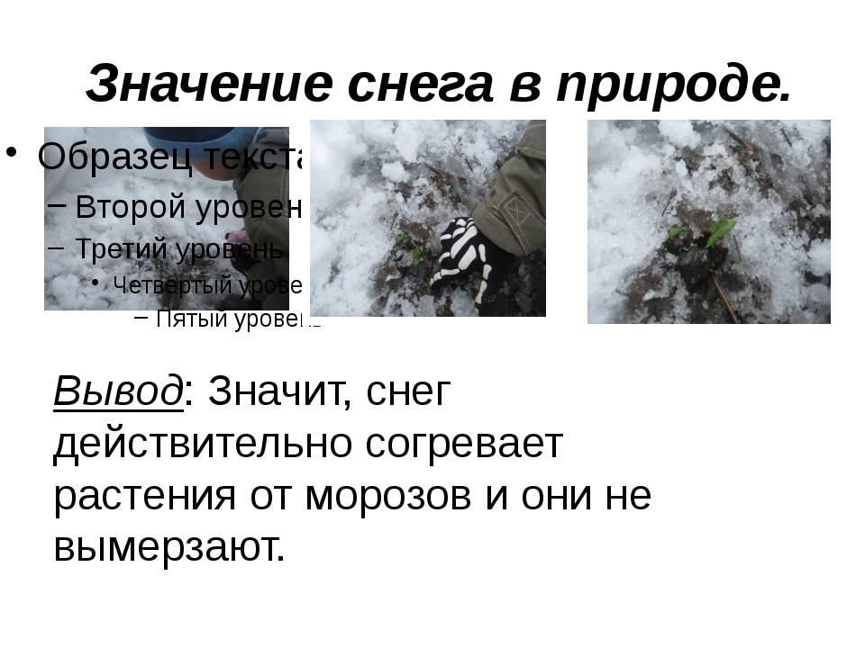 Значение снега в природе. Вывод: Значит, снег действительно согревает растен...