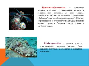 Креветки-богомолы - красочные морские существа с уникальным зрением и смерто