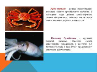 Краб-стригун – донные ракообразные, имеющие важное промысловое значение. В п