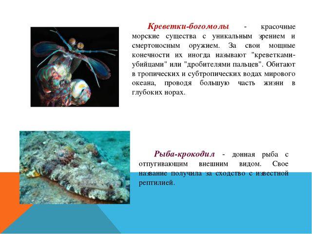 Креветки-богомолы - красочные морские существа с уникальным зрением и смерто...