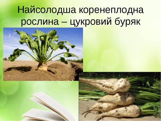 Найсолодша коренеплодна рослина – цукровий буряк