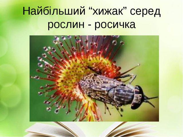 """Найбільший """"хижак"""" серед рослин - росичка"""