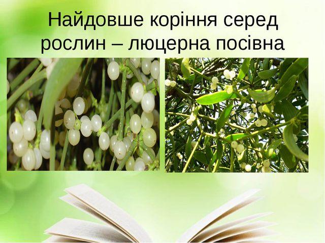 Найдовше коріння серед рослин – люцерна посівна