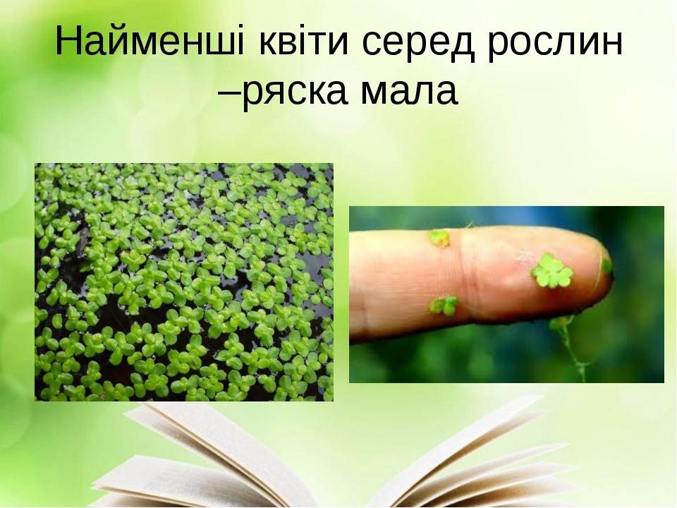 Найменші квіти серед рослин –ряска мала
