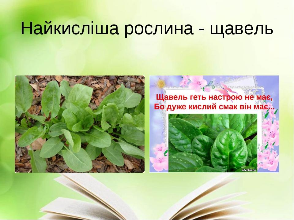 Найкисліша рослина - щавель