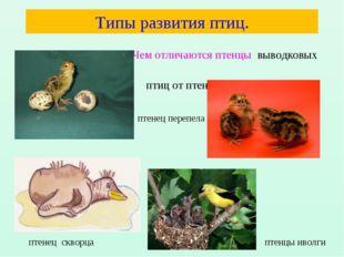 Типы развития птиц. Чем отличаются птенцы выводковых птиц от птенцов гнездовы