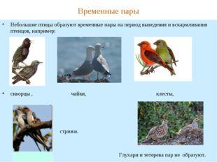 Временные пары Небольшие птицы образуют временные пары на период выведения и