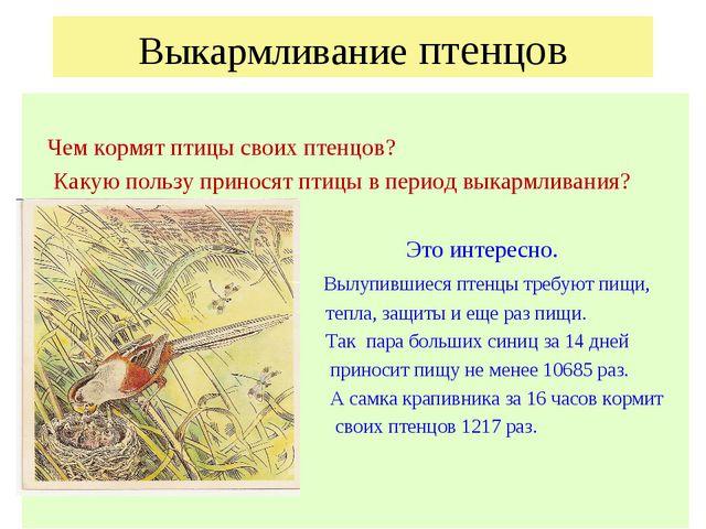 Выкармливание птенцов Чем кормят птицы своих птенцов? Какую пользу приносят п...