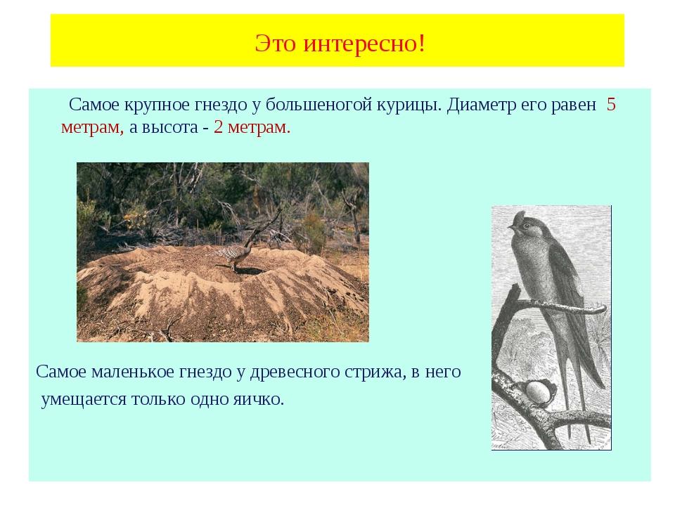 Это интересно! Самое крупное гнездо у большеногой курицы. Диаметр его равен...