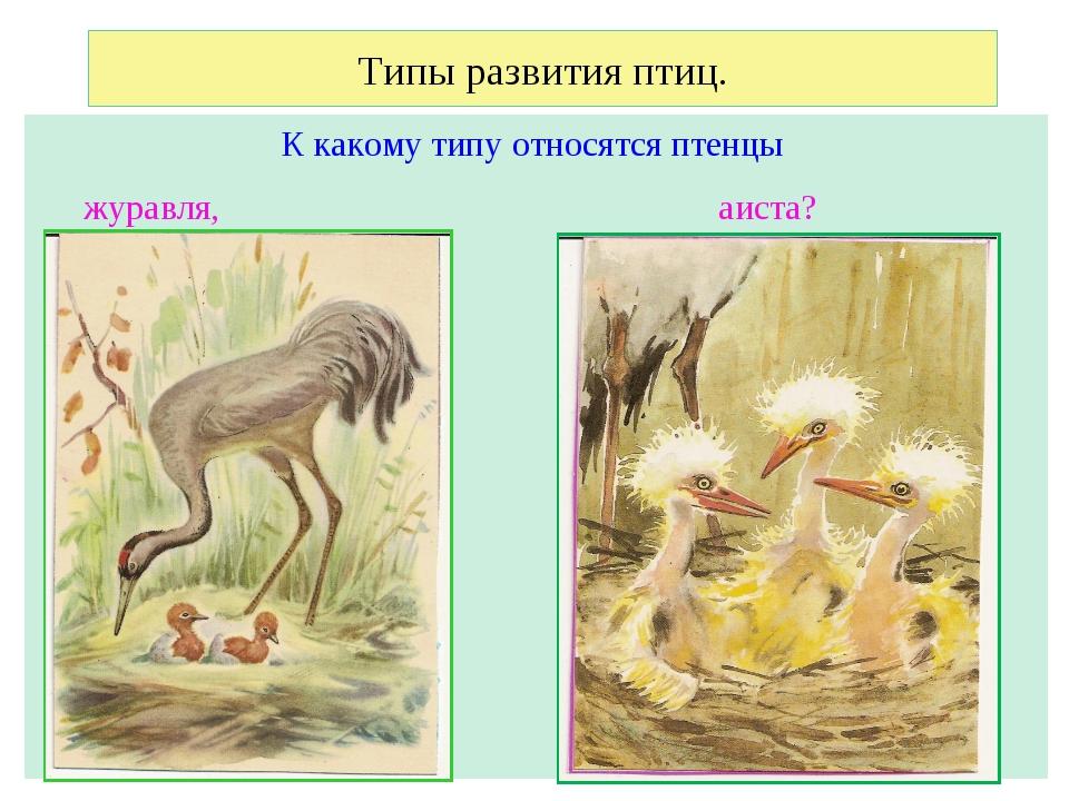 Типы развития птиц. К какому типу относятся птенцы журавля, аиста?