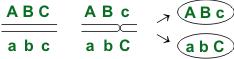 Схема кроссинговера-2
