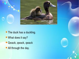 The duck has a duckling. What does it say? Qwack, qwack, qwack All through t