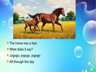 The horse has a foal. What does it say? Jogogo, jogogo, jogogo All through t