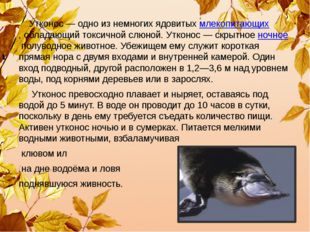 Утконос— одно из немногих ядовитыхмлекопитающих,обладающий токсичной слюн