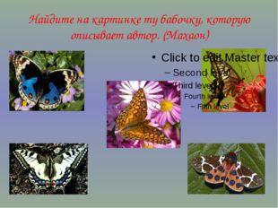 Найдите на картинке ту бабочку, которую описывает автор. (Махаон)