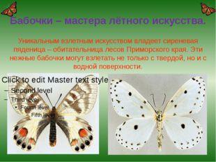 Бабочки – мастера лётного искусства. Уникальным взлетным искусством владеет с