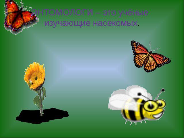 ЭНТОМОЛОГИ – это учёныеизучающие насекомых.