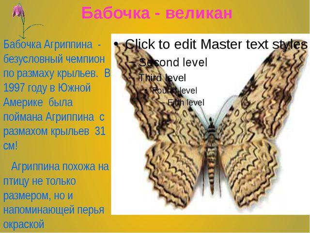 Бабочка - великан Бабочка Агриппина - безусловный чемпион по размаху крыльев...