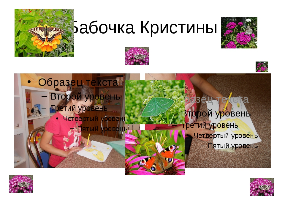 Бабочка Кристины