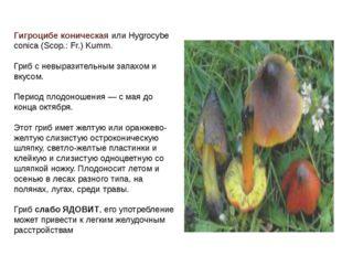 Гигроцибе коническая или Hygrocybe conica (Scop.: Fr.) Kumm. Гриб с невыразит