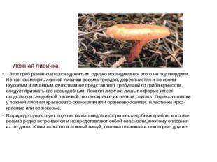 Ложная лисичка.  Этот гриб ранее считался ядовитым, однако исследования это