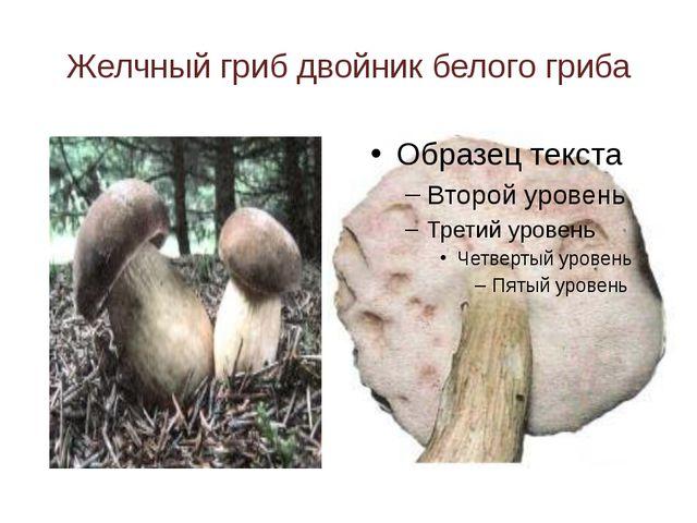 Желчный гриб двойник белого гриба