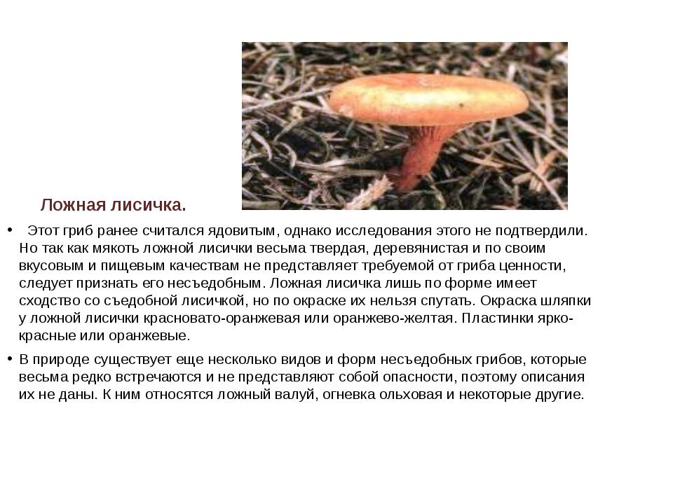Ложная лисичка.  Этот гриб ранее считался ядовитым, однако исследования это...