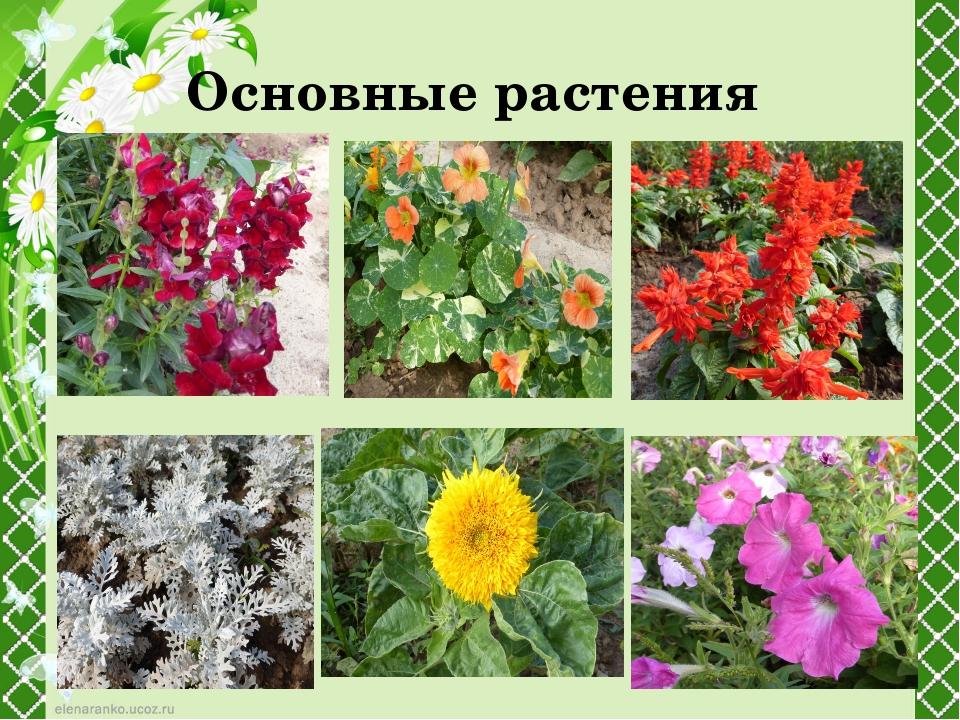 Основные растения