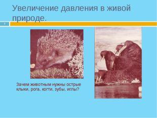 * Зачем животным нужны острые клыки, рога, когти, зубы, иглы? Увеличение дав