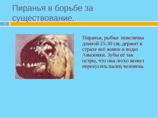* Пиранья, рыбка- невеличка длиной 25-30 см, держит в страхе всё живое в вод