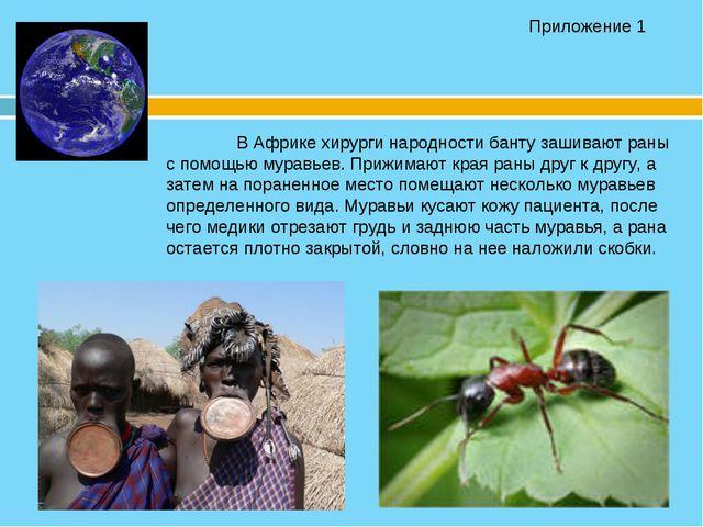 В Африке хирурги народности банту зашивают раны с помощью муравьев. Приж...