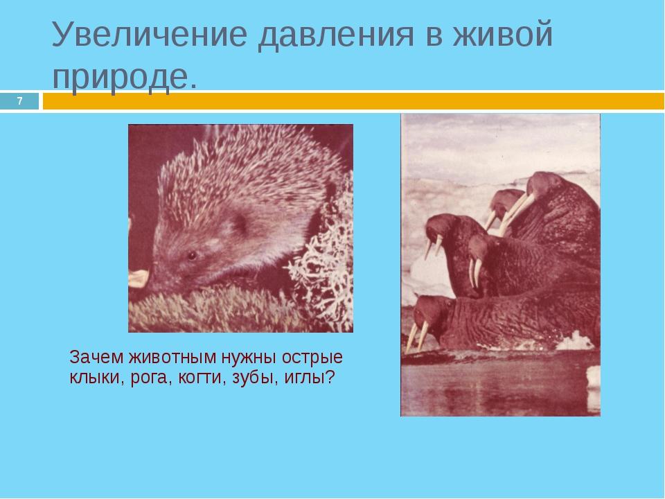 * Зачем животным нужны острые клыки, рога, когти, зубы, иглы? Увеличение дав...