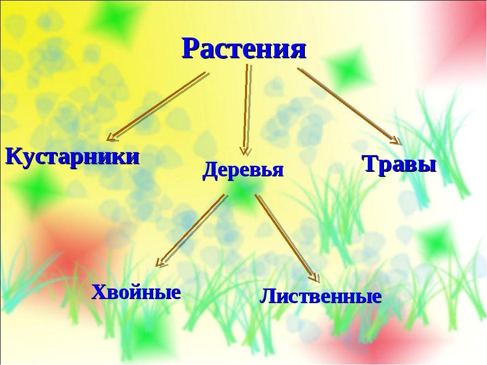 Растения Деревья Кустарники Травы Лиственные Хвойные