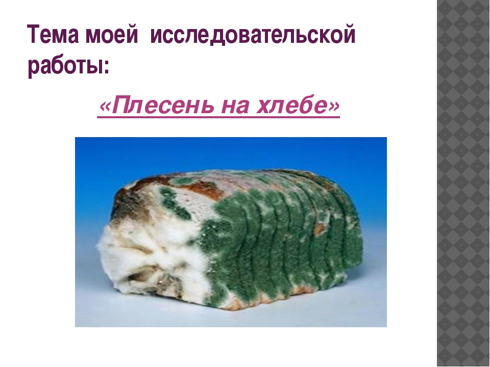 Тема моей исследовательской работы: «Плесень на хлебе»