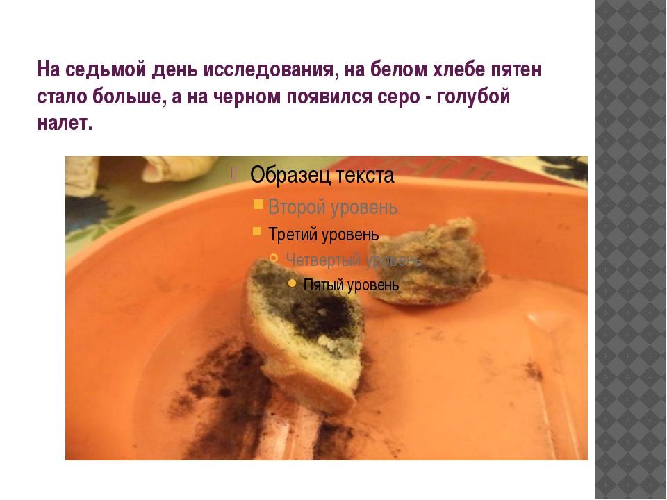 На седьмой день исследования, на белом хлебе пятен стало больше, а на черном...