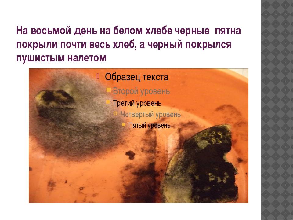 На восьмой день на белом хлебе черные пятна покрыли почти весь хлеб, а черный...