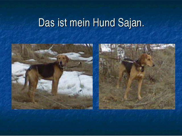 Das ist mein Hund Sajan.