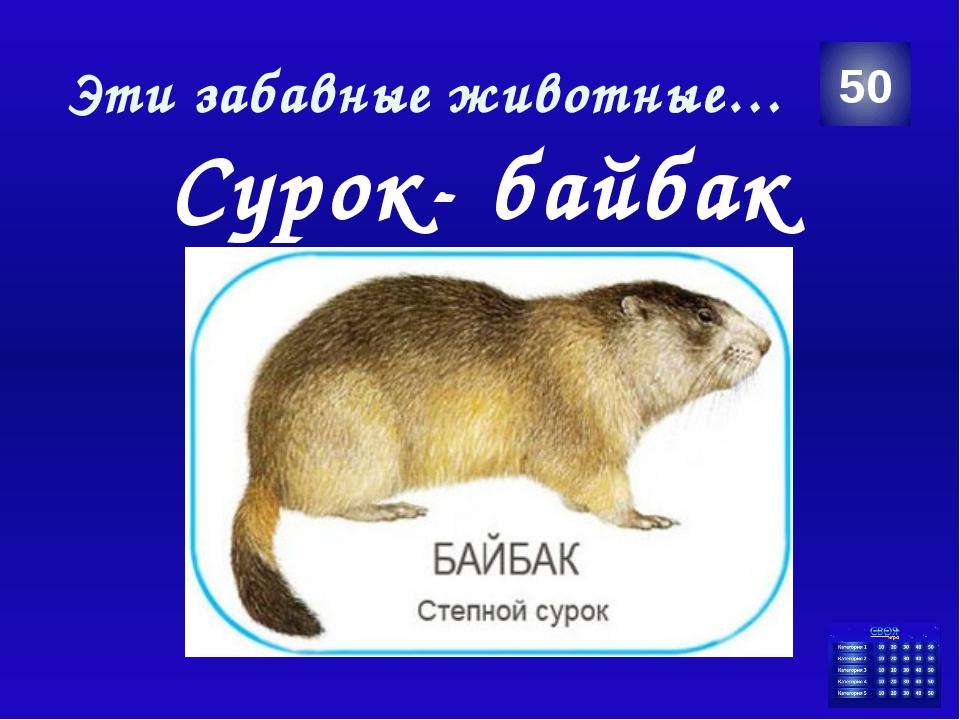 Великие люди Аркадий Пластов 10 Категория Ваш ответ