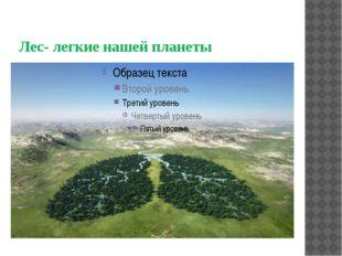 Лес- легкие нашей планеты