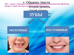 Зуб— орган, служащий в основном для первичной механической обработки пищи.