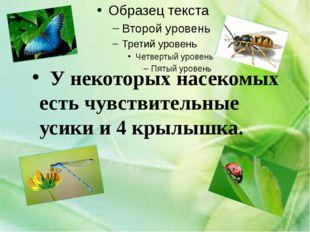У некоторых насекомых есть чувствительные усики и 4 крылышка.