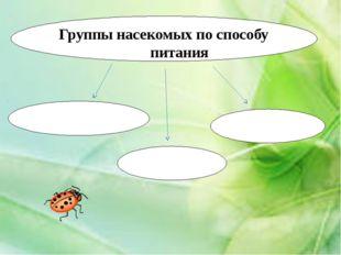 Группы насекомых по способу питания